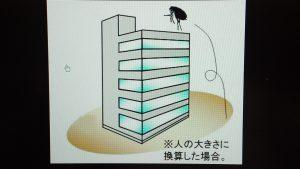 芦屋市のピアノ教室「カノンピアノ」のみの天井