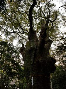 生田神社 「生田の森」